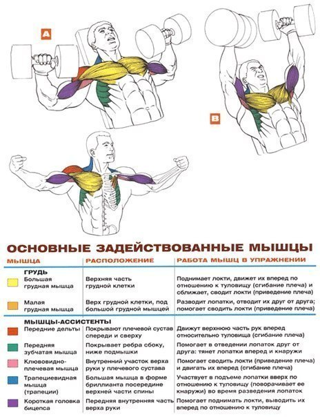 Эффективное упражнение на грудные мышцы в домашних условиях