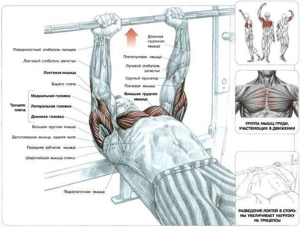 Упражнения для мышц груди 2 - Тренировки - Каталог статей - Займись собой